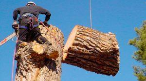 валка деревьев донецк макеевка